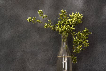 blooming green oregano in glass jars Reklamní fotografie