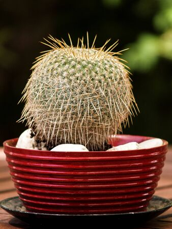 round cactus with many thorns