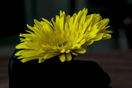 gerbera flower on abstracta background Stock fotó