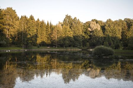 forest and lake with reflections