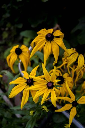 yellow daisies at garden outdoors Imagens