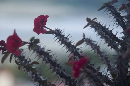 prickly plant with red flowers