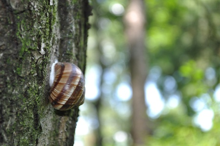 Snail on the tree with forest background Stock Photo