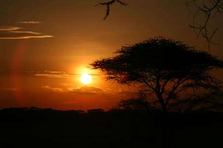 Sunset at serengeti national park, tanzania, africa