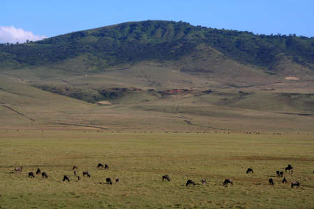 outside the ngorongoro crater, tanzania photo
