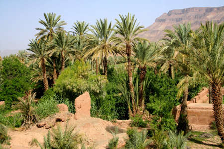 oasis in south of morocco Stock Photo
