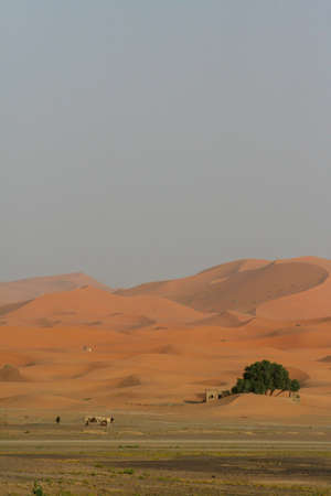 Sand dunes of Erg Chebbi in the Sahara Desert, Morocco photo