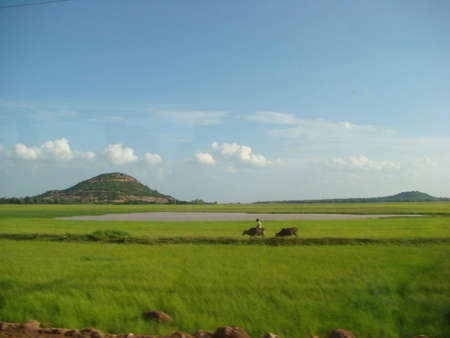 cambodian rice fields  photo