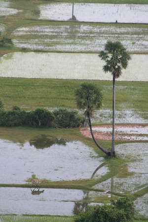 areal view at  cambodian rice fields at early morning Stock Photo - 5926613