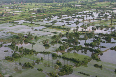 areal view at  cambodian rice fields at early morning