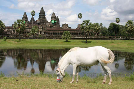 white horse in front of the ancient temple of Angkor Wat, Cambodia photo