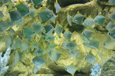 under water Stock Photo - 5938129