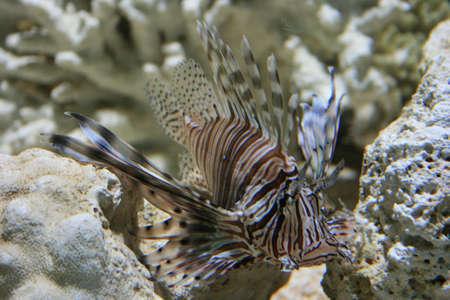 under water Stock Photo - 5938139