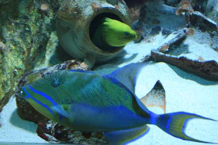 under water Stock Photo - 5938128