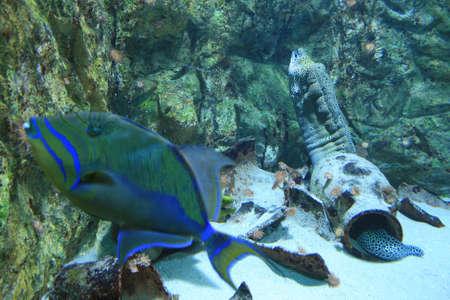 under water Stock Photo - 5938181