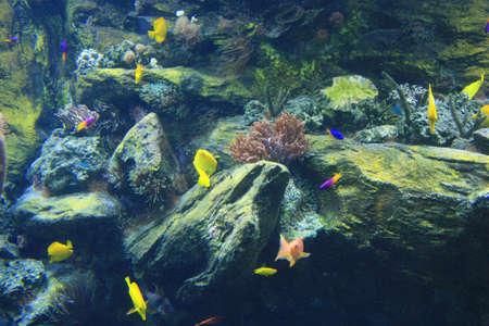 coral life photo