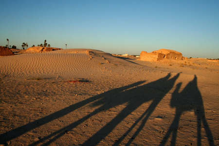 shadow of camels in sahara desert  photo