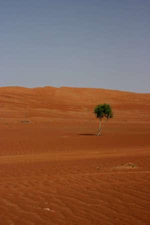 The desert Wahiba sands in Oman, arabian peninsula  photo