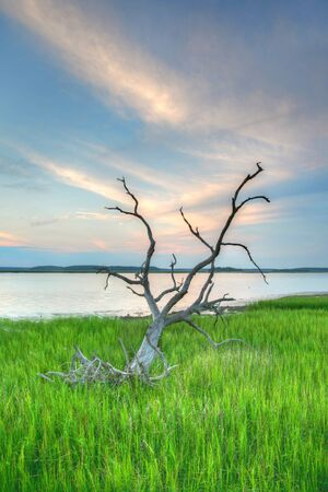 gnarled: gnarled tree in green grass with blue sky Stock Photo