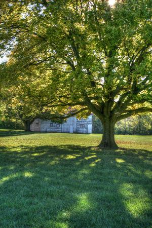 huge tree: Large tree providing shade on sunny day Stock Photo