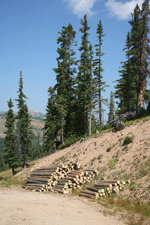 stock vista: Logs stripped and stacked waiting for use in construction Stock Photo