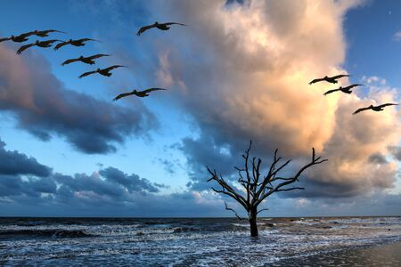 Oak tree submersed in water at sunrise with storm clouds in the boneyard beach of Edisto Island, South Carolina Stock Photo