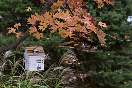 Decorative birdhouse hung on tree with fall colors and blurred background of green