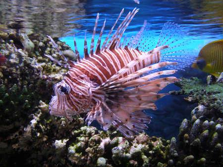 coloful: Coloful fish