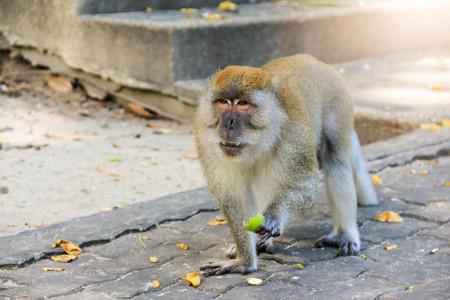 iluminado a contraluz: Closeup mono caminando