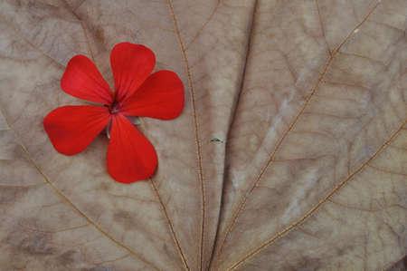red flower on dry leaf