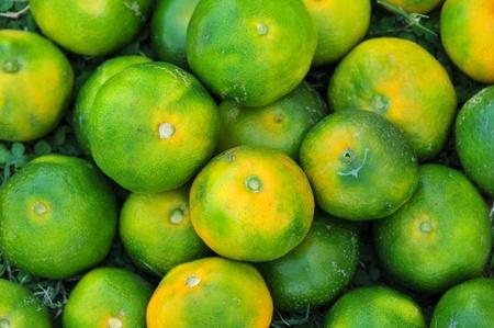 mandarins: green mandarins