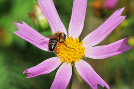 Bee on flower photo