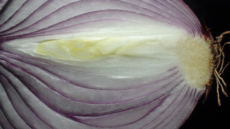 isolated onion slice