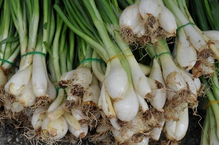 isolated spring onions Stock Photo