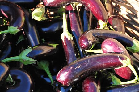 isolated eggplants