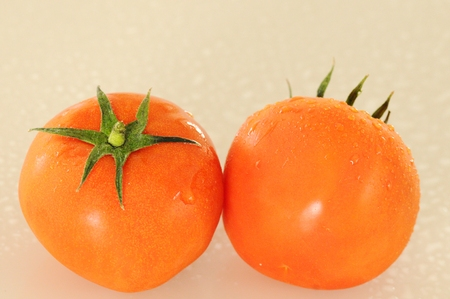 isolated red tomatoes