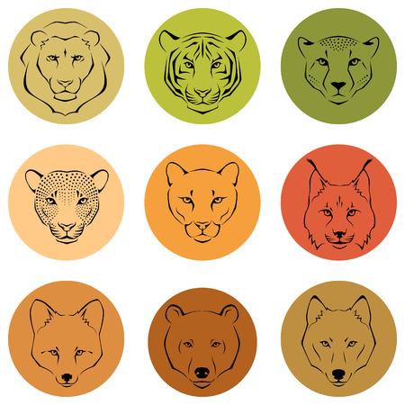 lince: Ilustraciones de líneas simples que muestran diferentes rasgos faciales de animales salvajes