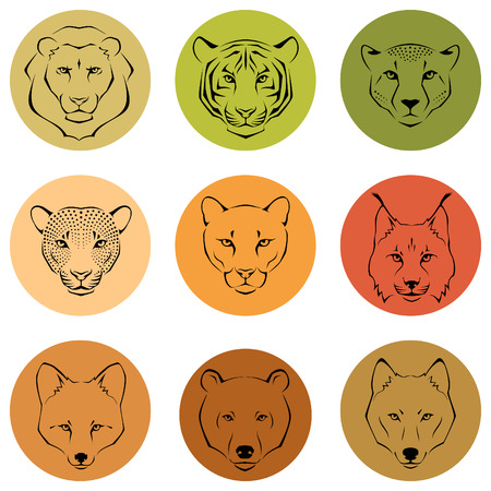 Simple line illustrations showing different facial features of wild animals Illustration