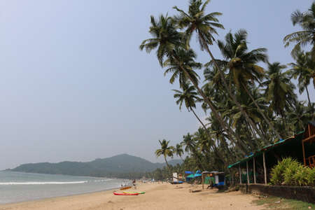 coconut trees by the sea Goa India