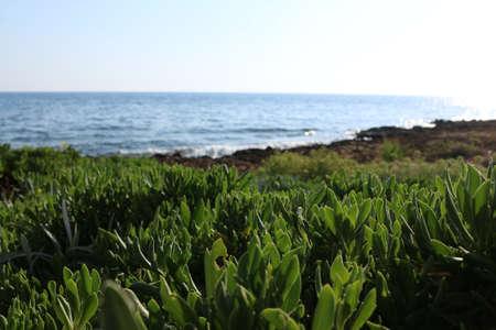 green grass near the sea Cyprus Protaras