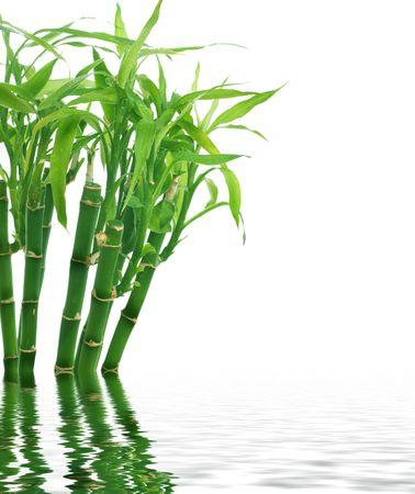 japones bambu: Bamb�