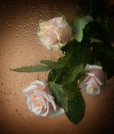 Roses and Rain photo