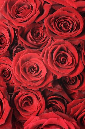Red Roses Texture photo