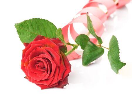 Beautiful Rose isolated on white photo