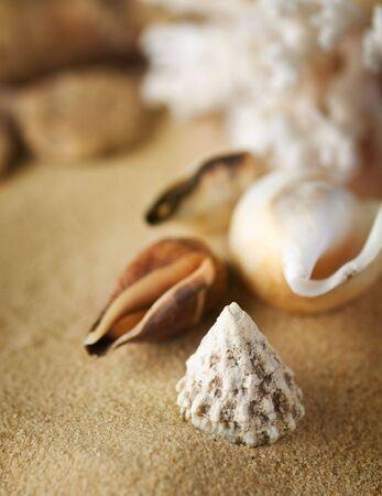 Seashells on the sand.Selective focus photo