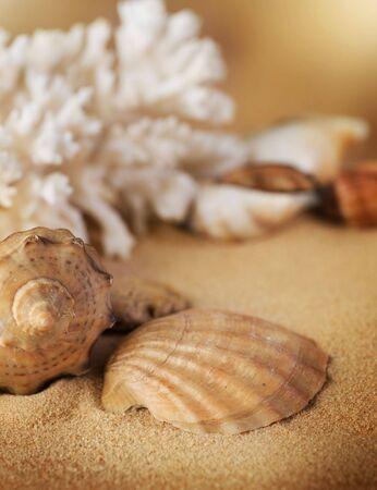 Seashells on the sand photo