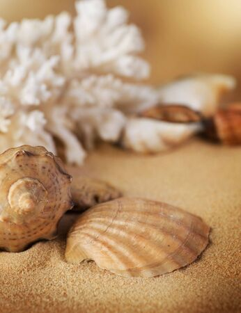 Seashells on the sand photo