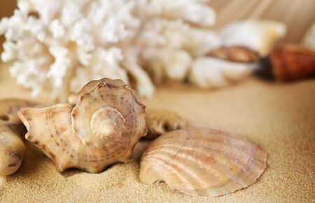 Seashells on the sand.Selective focus photo