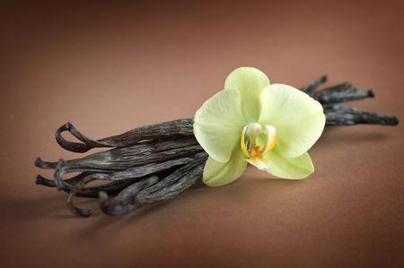 flor de vainilla: Granos de vainilla y flor sobre fondo marr�n
