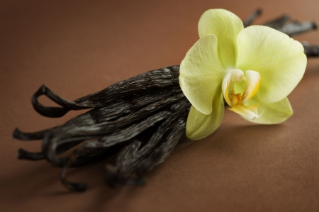 beverage in bean: Vanilla close-up
